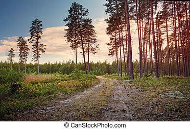 naald, morgen, het glanzen, bos, zon