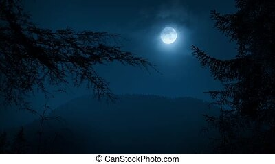 nacht, bos, bomen, het ontwerpen