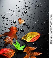 nat, bladeren, helder, herfst
