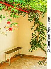 natuur, bloemen, mooi, park, achtergrond