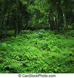 natuur, tropische , achtergrond., groen bos, wild, landscape, jungle