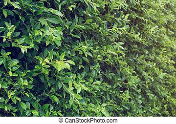natuurlijke , boompje, dauw, water, achtergrond, groen blad, druppels