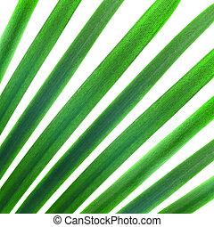 natuurlijke knippatroon, bladeren, vrijstaand, palm, groen wit