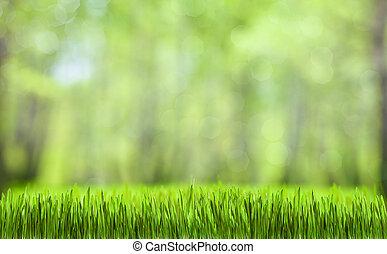 natuurlijke , lente, abstract, groen bos, achtergrond