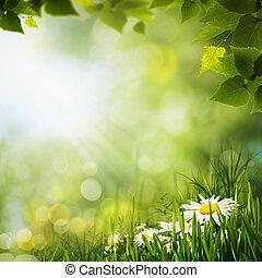 natuurlijke , weide, flowes, achtergronden, groene, madeliefje, ontwerp, jouw