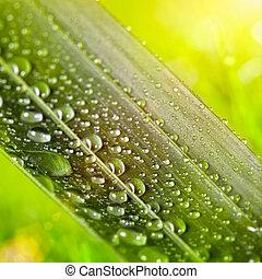 natuurlijke , zonnig, water, groene achtergrond, blad, druppels
