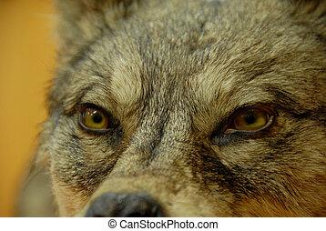 of, dog, wolf