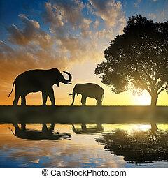 olifanten, silhouette