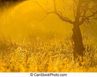 olijf boom, gloed