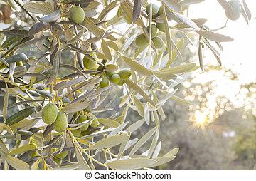 olive, brunch, boompje