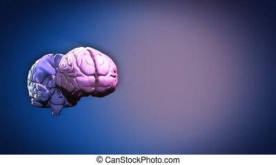 onderdelen, hersenen, aangepunt