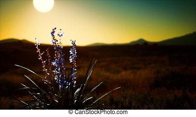ondergaande zon , bloemen, wild, heuvels