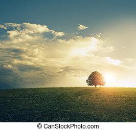 ondergaande zon , field., grassig