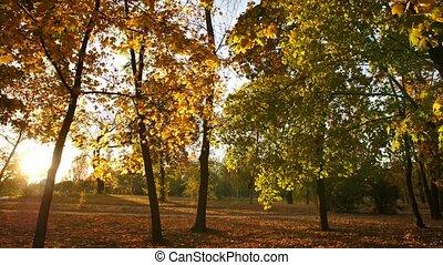 ondergaande zon , herfst, park