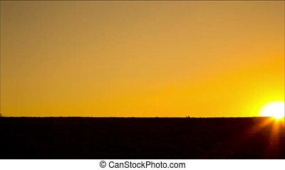 ondergaande zon , rennende , geitjes, silhouette, tegen