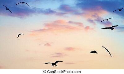 ondergaande zon , vogels