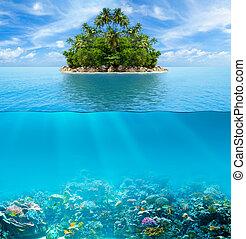 onderwater, coraal, bewateer oppervlakte, tropische , zeebedding, rif, isl