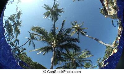 onderwater, ongewoon, pool, bomen., hemel, effect, water, geplaatste, fototoestel, palm, verfilming, maakt, zwemmen
