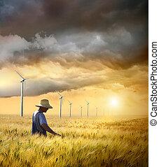 oogst, farmer, zijn, controleren, tarwe