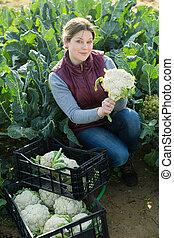 oogst, vrouw, bloemkool