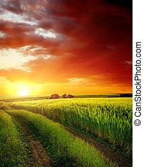 op, akker, groene, straat, landelijk, ondergaande zon , rood