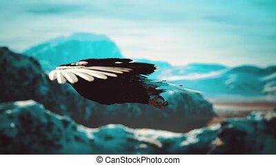 op, amerikaan, bergen, vertragen, adelaar, vlucht, alaskan, kaal, motie