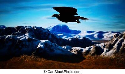 op, bergen, vertragen, amerikaan, motie, kaal, vlucht, alaskan, adelaar