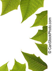 op, bladeren, achtergrond, grens, groen wit