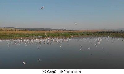 op, marshland., vogels te vliegen, vlucht