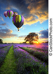 op, vliegen, lavendel, lucht, warme, ondergaande zon , ballons, landscape