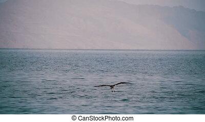 op, vliegen, sea., zee, osprey, vogel, rood