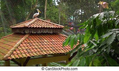 openbaart, grit, zittende , tropics., bovenzijde, walkways, park, lang, fototoestel, steadicam, waterval, paviljoen, pelikan, vogel