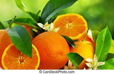oranje bloemen, vruchten
