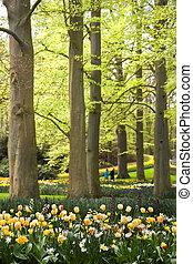 oud, lente, park, beechtrees, onder, bloemen