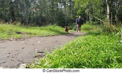oud, vrouw, park, dachshund