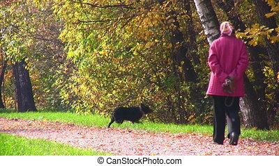 oude vrouw, park, dog, herfstachtig