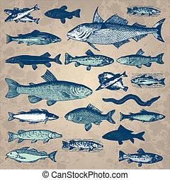 ouderwetse , visje, set, (vector)