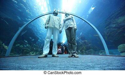 paar, aanzicht, oceanarium, bodem