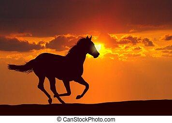 paarde, ondergaande zon , rennende