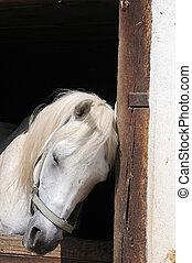 paarde, slapende