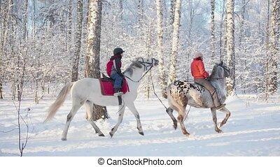 paarde, winter, gezin, wandeling, park, riding., horseback., vers zenden uit, wandeling