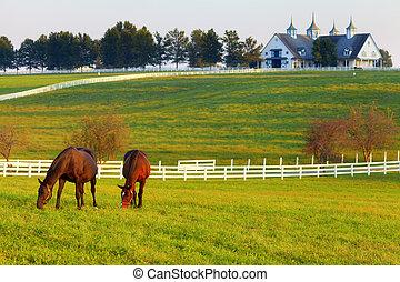 paarden, boerderij