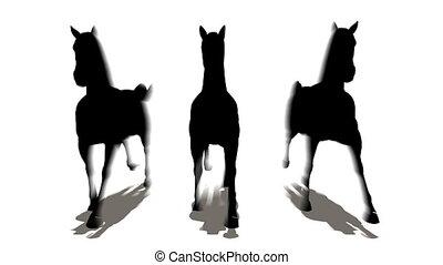 paarden, drie