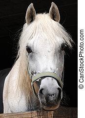 paarden, eyes