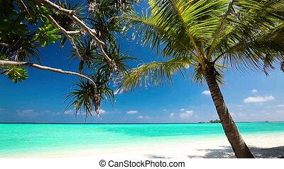 palm, op, lagune, tropische , bomen