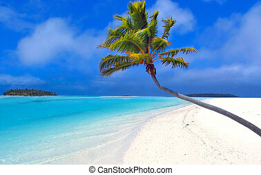 palm, paradijs