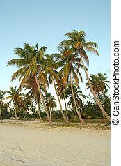 palm strand, bomen