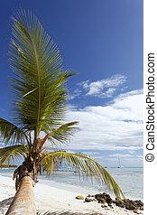 palm strand