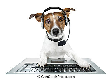 pc computer, dog, tablet