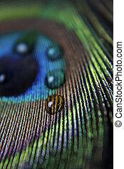 peacock veer, droplets